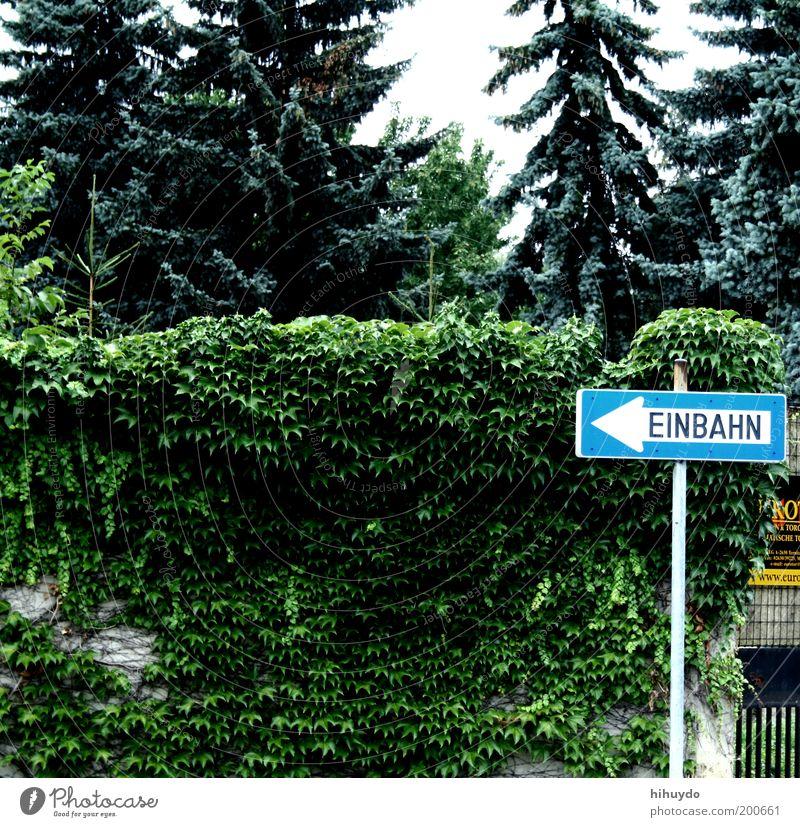 einbahn Natur Pflanze Blatt Umwelt Garten Schilder & Markierungen Hinweisschild Sträucher beobachten Pfeil Tanne Richtung zeigen links Hecke Verkehrsschild