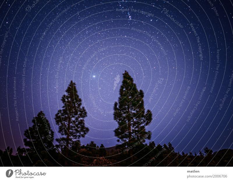 Venushügel Natur Landschaft Himmel Wolkenloser Himmel Stern Schönes Wetter Baum Berge u. Gebirge blau schwarz weiß Farbfoto Gedeckte Farben Außenaufnahme Muster