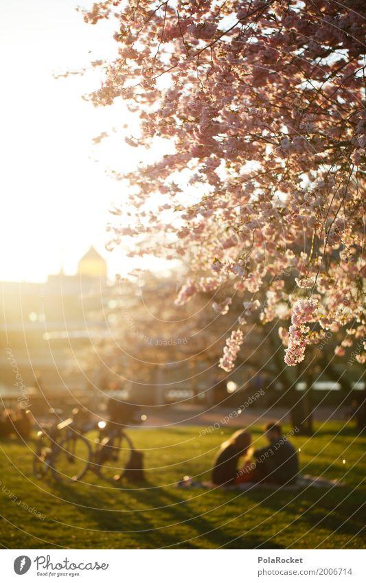 #AS# Großstadtromantik Umwelt Natur Klima Schönes Wetter Garten Park Wiese ästhetisch Idylle Dresden Yenidze Blühend Blühende Landschaften Frühling