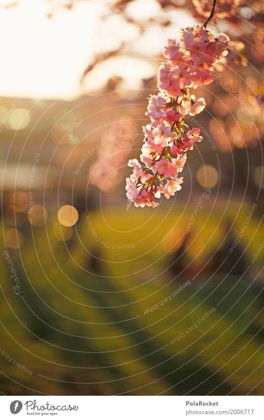 #AS# Dresden im Frühling II Kunst ästhetisch Frühlingsgefühle Frühlingstag Frühlingsfarbe Blüte Blütenknospen Blütenblatt Blühend Blühende Landschaften Farbfoto