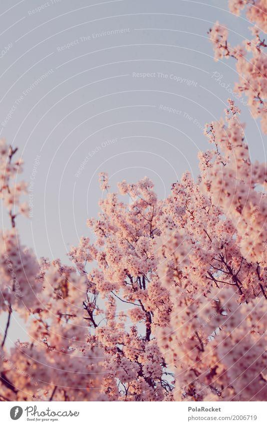 #AS# Rosa Frühling II Natur Landschaft Pflanze ästhetisch Frühlingsgefühle Frühlingstag Frühlingsfarbe Frühlingsfest Blühend Blühende Landschaften viele