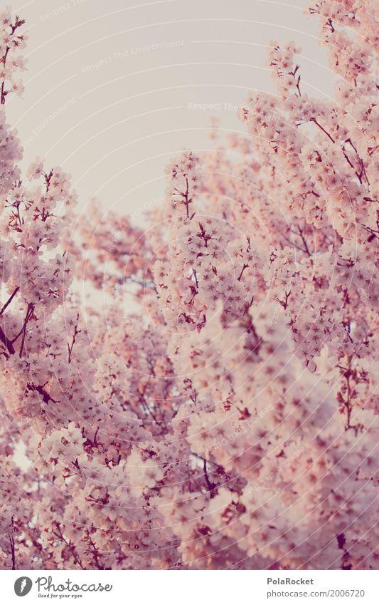 #AS# Rosa Frühling I Blüte Kunst rosa ästhetisch viele Blütenblatt Frühlingsgefühle Kirschblüten Kirschbaum Frühlingstag Frühlingsfarbe Frühlingsfest
