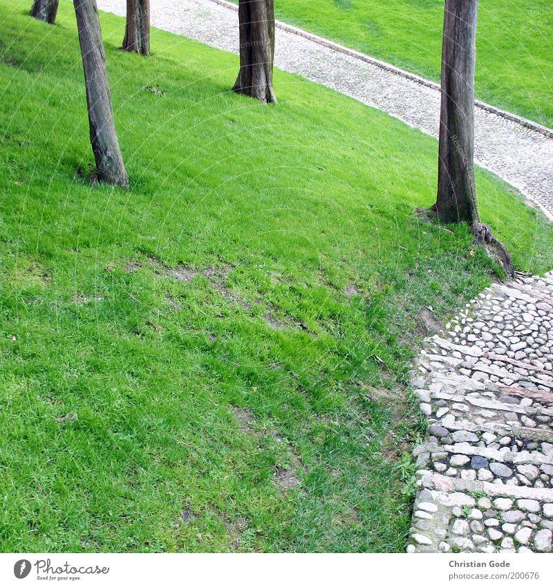 Hang Natur Baum grün Sommer Wiese Garten Stein Wege & Pfade Park Landschaft Umwelt Rasen Italien Kopfsteinpflaster Baumstamm