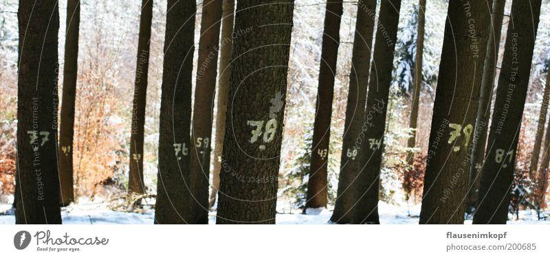 Wald vor Bäumen nicht gesehen Natur Baum Winter ruhig Schnee Holz Umwelt Schilder & Markierungen Wachstum Ziffern & Zahlen Baumstamm Rätsel Denken nachhaltig
