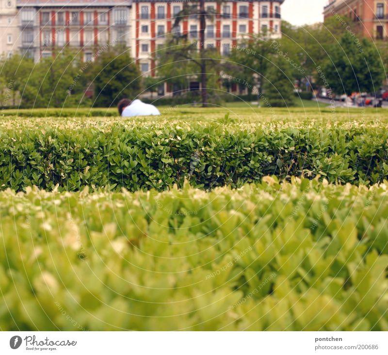 Mann bückt sich vor akkurat geschnittener Hecke. Parkanlage Erwachsene 1 Mensch Pflanze Sträucher Grünpflanze Madrid Spanien Hauptstadt Haus Bauwerk