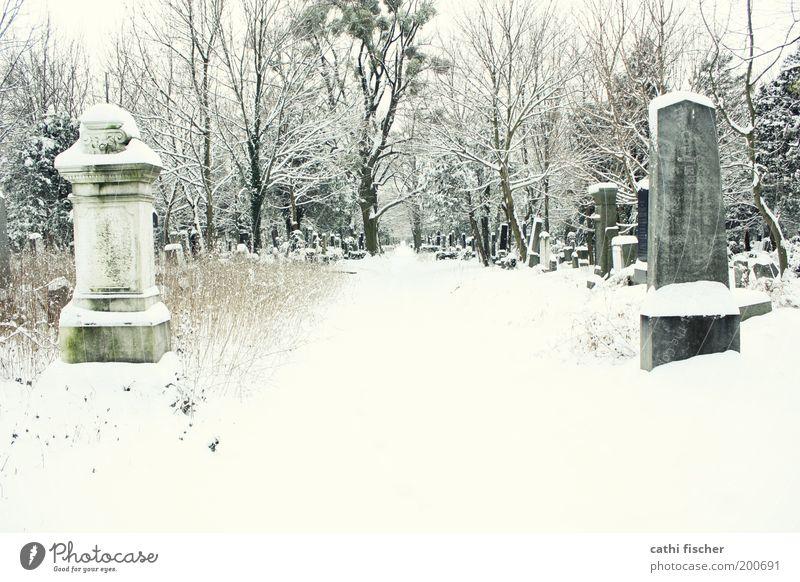 zentralfriedhof/winter II alt weiß Baum Einsamkeit Winter Wald Umwelt Wege & Pfade Schnee grau Garten Stein Park Wetter Eis Sträucher