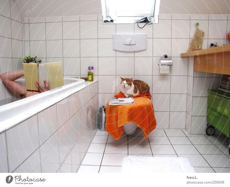 Bad Mensch Freude ruhig Tier Erholung Medien träumen Katze Freundschaft Zufriedenheit Zusammensein orange Buch Erwachsene maskulin lesen