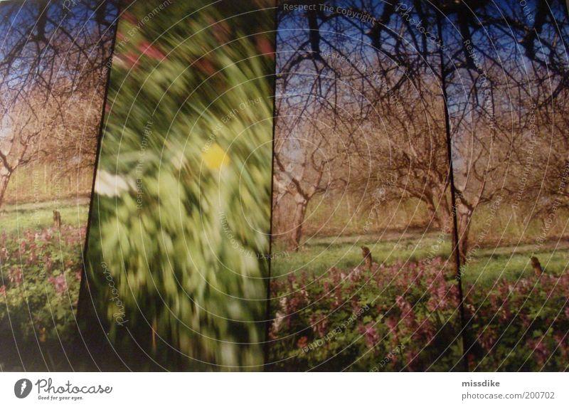 what happened? Natur Baum Blume grün blau Pflanze gelb Wiese Gras Frühling Garten Park Landschaft Stimmung braun