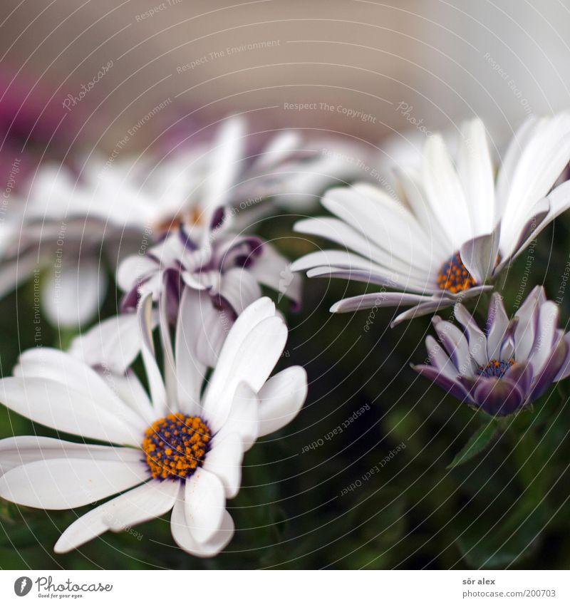 Blümchen weiß grün schön Pflanze Blume Freude gelb Gefühle Frühling Garten Blüte rosa natürlich Wachstum Kitsch zart