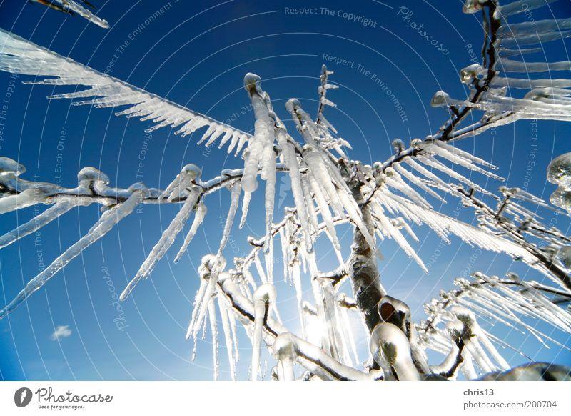 eiszapfen Himmel Winter Eis Frost Baum kalt blau weiß Umwelt Detailaufnahme Weitwinkel Eiszapfen