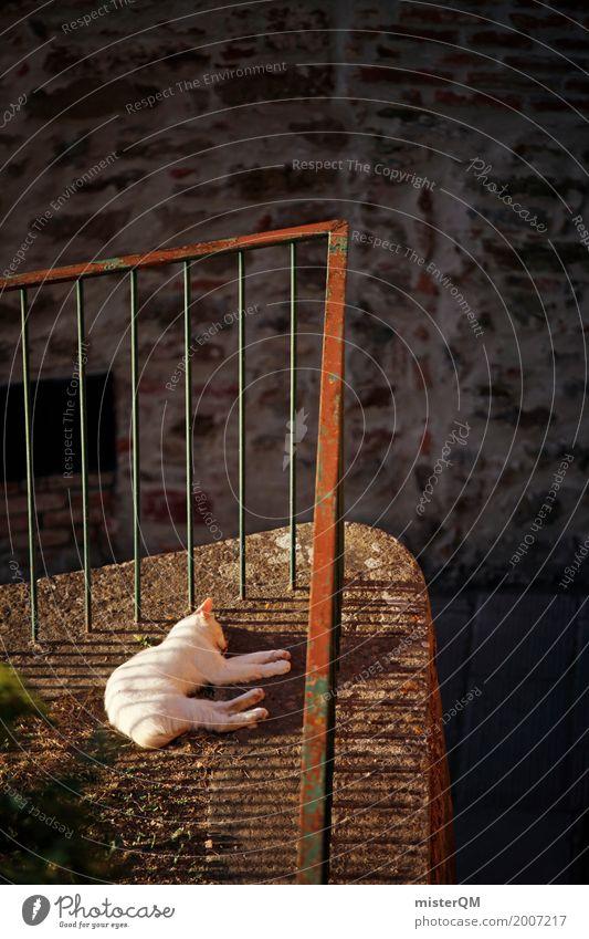 Sunny Cat. Katze Tier Kunst liegen ästhetisch schlafen Geländer Haustier Hauskatze Süden Hinterhof