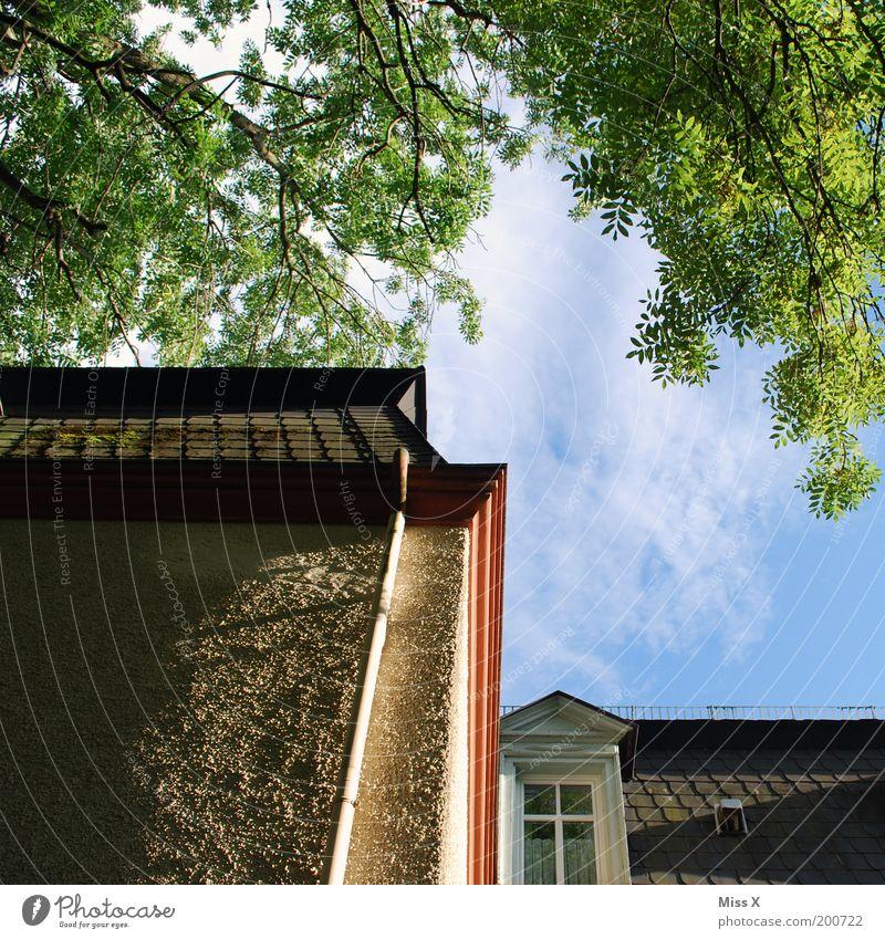 Mein Elternhaus alt Himmel Baum Haus Wand Fenster Mauer Gebäude Architektur hoch Fassade Dach Idylle Zweige u. Äste gigantisch Pflanze