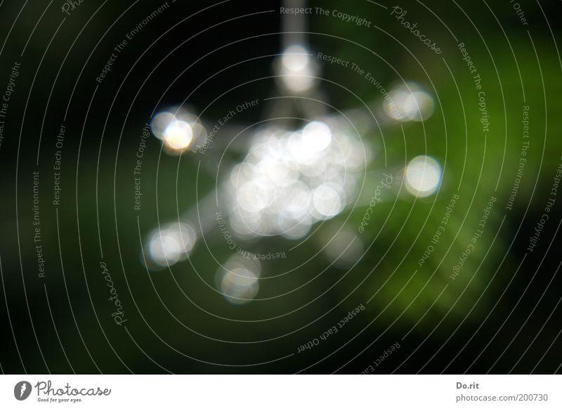 für ginger schön grün Freude Glück glänzend Stern (Symbol)