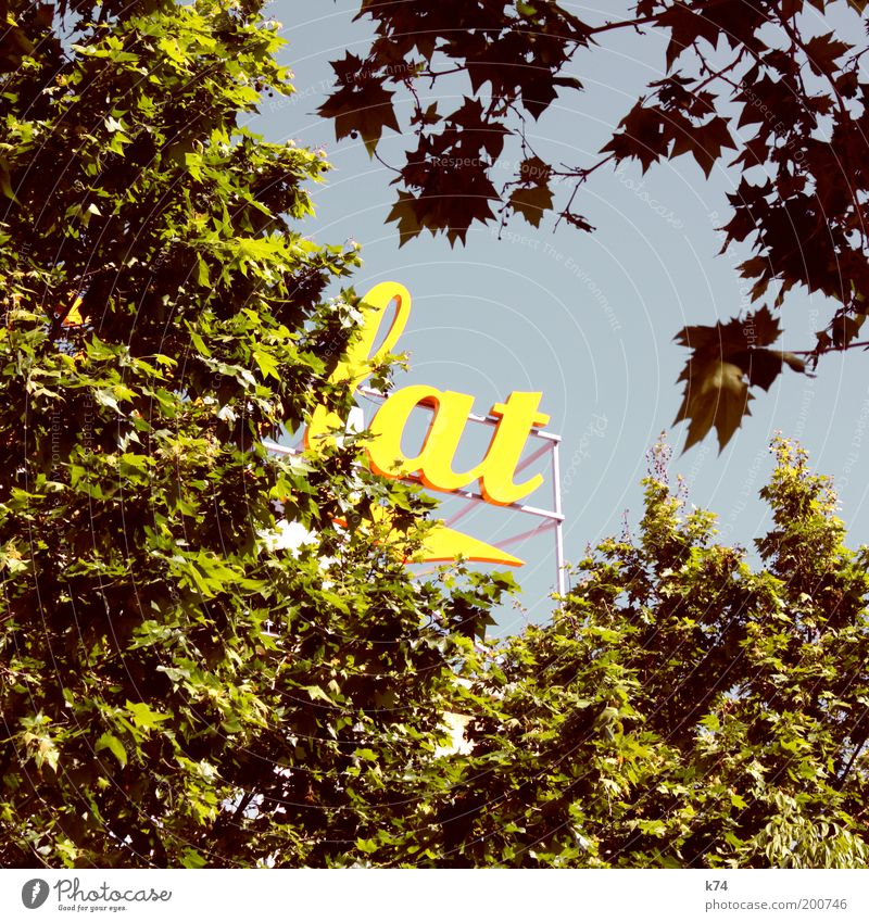 lat Himmel Baum grün Sommer gelb Frühling Schriftzeichen Werbung Typographie Ahorn Grünpflanze Sonnenlicht Wolkenloser Himmel Platane