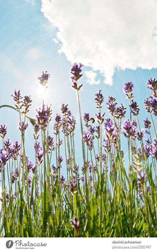 nehmt das - oder schaut aus dem Fenster !! Natur Himmel weiß Sonne grün blau Pflanze Sommer Wolken Blüte hell Feld Umwelt Klima violett Kräuter & Gewürze