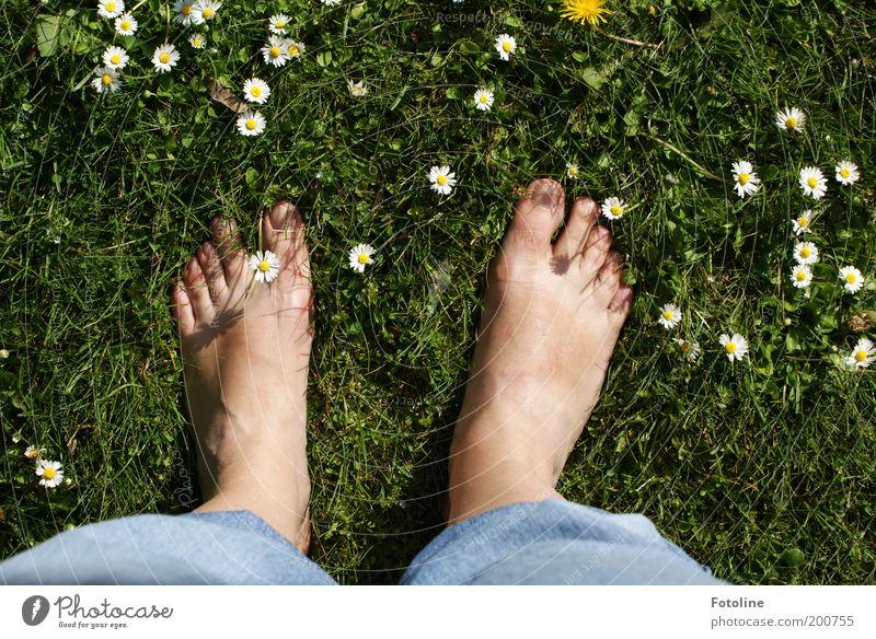 Meine Füße :-)) Erwachsene Haut Beine Fuß Umwelt Natur Pflanze Sommer Schönes Wetter Blume Gras Blüte Garten Park Wiese Wärme weich grün Gänseblümchen Barfuß