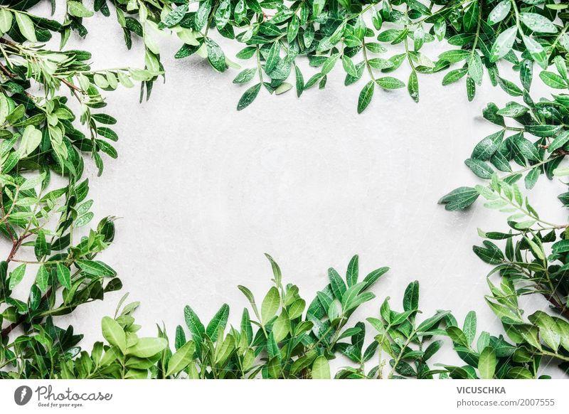 Natur Hintergrund mit grünen Zweige und Blätter Lifestyle Stil Design Freizeit & Hobby Sommer Garten Pflanze Frühling Sträucher Blatt Dekoration & Verzierung