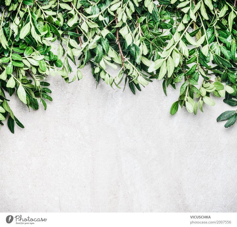 Natur Hintergrund mit grünen Blättern Stil Design Sommer Garten Pflanze Sträucher Blatt Grünpflanze Mauer Wand Ornament Hintergrundbild ökologisch Farbfoto
