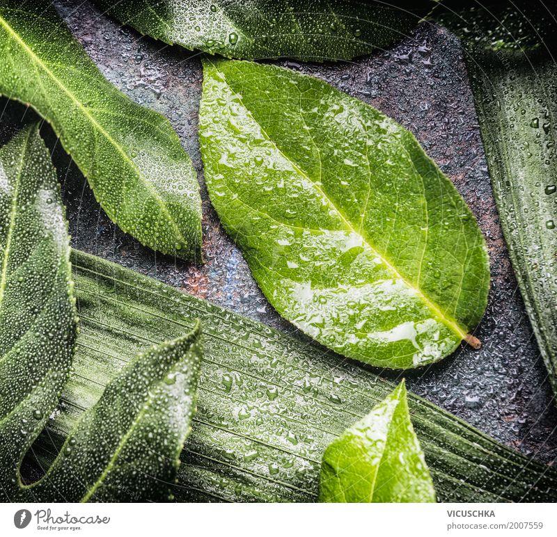 Grüne Blätter mit Wassertropfen Stil Design Leben Sommer Umwelt Natur Pflanze Blatt Grünpflanze grün Tropfen Farbfoto Innenaufnahme Nahaufnahme Makroaufnahme