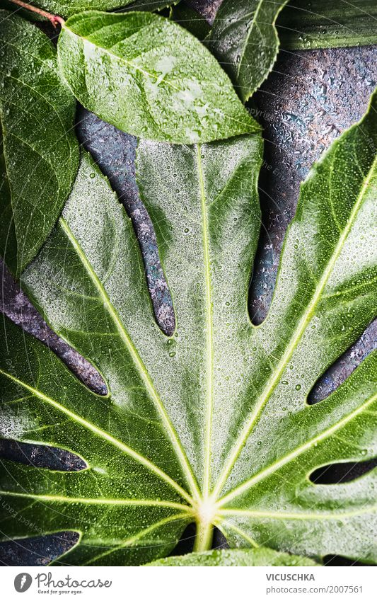 Grünes Blatt mit Wassertropfen Stil Design Leben Sommer Natur Pflanze Grünpflanze grün ökologisch Umwelt Umweltschutz tropisch Urwald Farbfoto Außenaufnahme