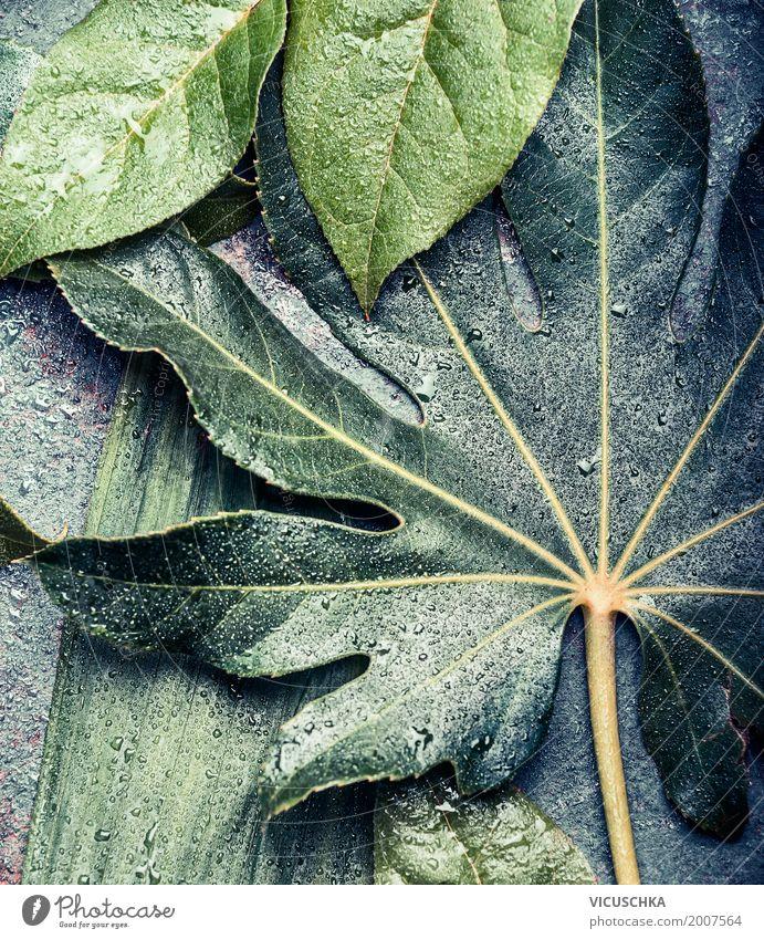 tropische pflanzen und bl ttern ein lizenzfreies stock foto von photocase. Black Bedroom Furniture Sets. Home Design Ideas