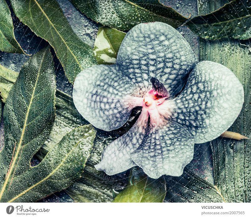 Blaue Orchidee auf tropischen Blätter Stil Design Leben Natur Pflanze Blume Blatt Blüte Urwald Orchideenblüte Wassertropfen Kreativität blau grün Farbfoto