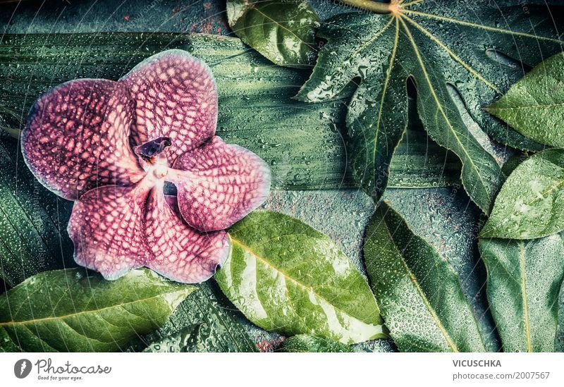 Orchidee Blume mit verschiedenen Blätter Stil Design Spa Sommer Natur Pflanze Blatt Blüte Grünpflanze Fahne rosa Hintergrundbild Palme Orchideenblüte grün