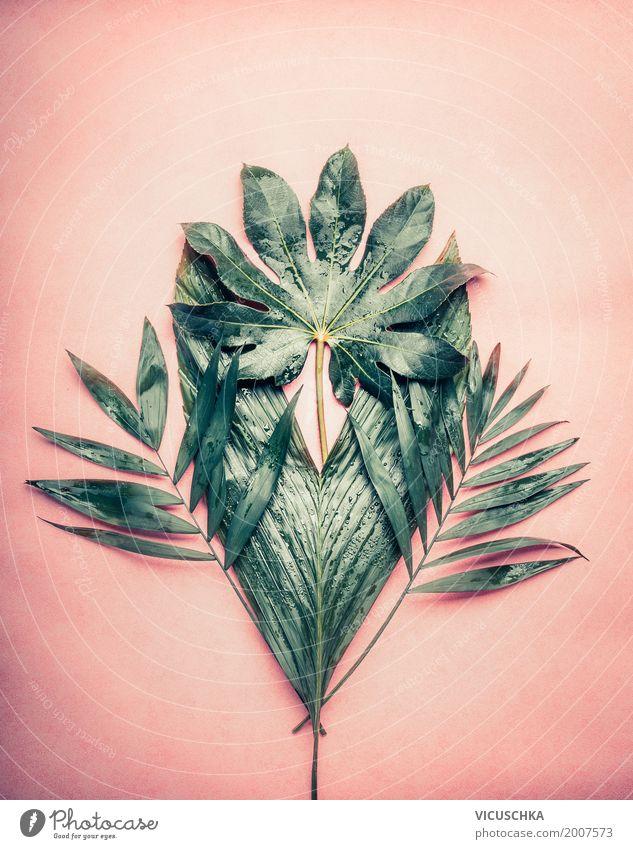 Bündel von verschiedenen tropischen Palmblättern Natur Pflanze Sommer grün Blatt Freude Stil Garten Design rosa Dekoration & Verzierung Sträucher Blumenstrauß