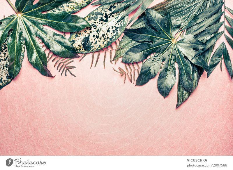 Tropische Dschungel Blätter auf rosa Hintergrund Natur Pflanze Sommer Stadt grün Blatt Leben Hintergrundbild Stil Design Dekoration & Verzierung Urwald Rahmen