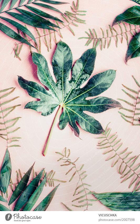 Tropische Pflanzen und Blättern Lifestyle Stil Design Sommer Natur Blatt Oase Dekoration & Verzierung Ornament rosa Hipster grün Grünpflanze tropisch Urwald
