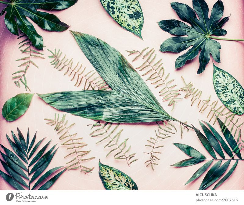 Verschiedene tropische Blättern auf pastell rosa Hintergrund Stil Design exotisch Ferien & Urlaub & Reisen Sommer Natur Pflanze Blatt Grünpflanze Urwald Oase