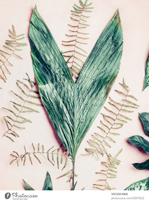 Grüne Blätter Natur Pflanze Sommer grün Blatt Stil Design rosa Dekoration & Verzierung Stillleben Palme Grünpflanze tropisch Pastellton