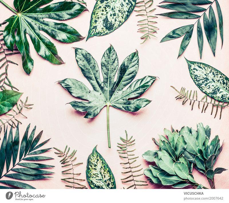 Verschiedene tropische Palmen und Farnblätter. Natur Pflanze Sommer Blatt Stil Garten Design rosa Sträucher exotisch Stillleben Urwald Botanik Grünpflanze