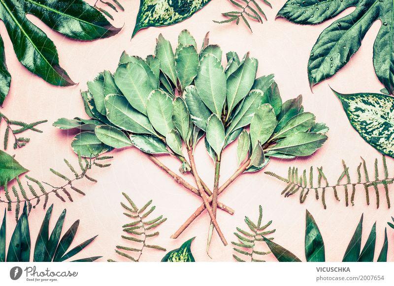 Tropische Palmen , Farnblätter und Zweige Natur Pflanze Sommer grün Baum Blatt Stil Garten Design rosa Park Dekoration & Verzierung Sträucher Urwald