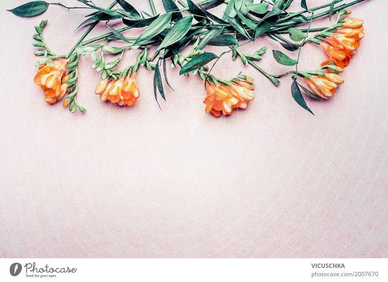 Blumen und Blätter auf Pastell rosa Hintergrund Natur Pflanze Sommer grün Blatt Blüte Hintergrundbild Stil Mode Feste & Feiern Design Textfreiraum