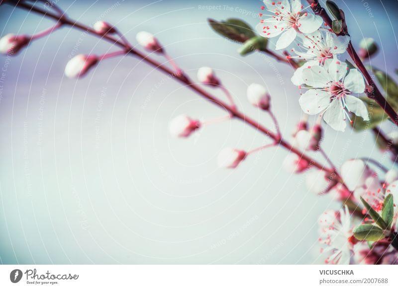 Kirschblüte Natur Hintergrund Stil Design Garten Pflanze Frühling Blume Blatt Blüte Park Blühend retro weich rosa Frühlingsgefühle Duft Hintergrundbild