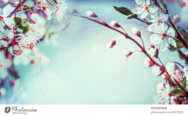 Schöner Frühling Natur Hintergrund Design Garten Pflanze Blatt Blüte Park Blühend weich rosa April Hintergrundbild Kirschblüten blau Himmel Zweige u. Äste