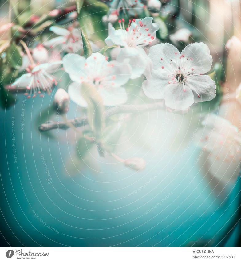 Hübsche Frühling Blüte von Kirschbaum Design Sommer Garten Natur Pflanze Schönes Wetter Baum Blume Blatt Park Blühend retro Hintergrundbild Kirschblüten türkis