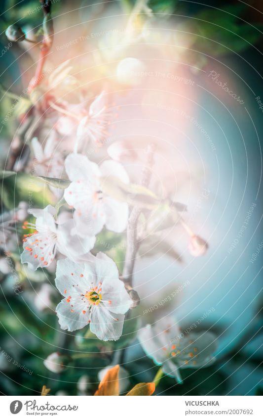 Frühjahr Blüten Natur Pflanze Sommer Blume Blatt Frühling Garten Design Park retro Blühend Schönes Wetter Frühlingsgefühle Kirschblüten Frühblüher