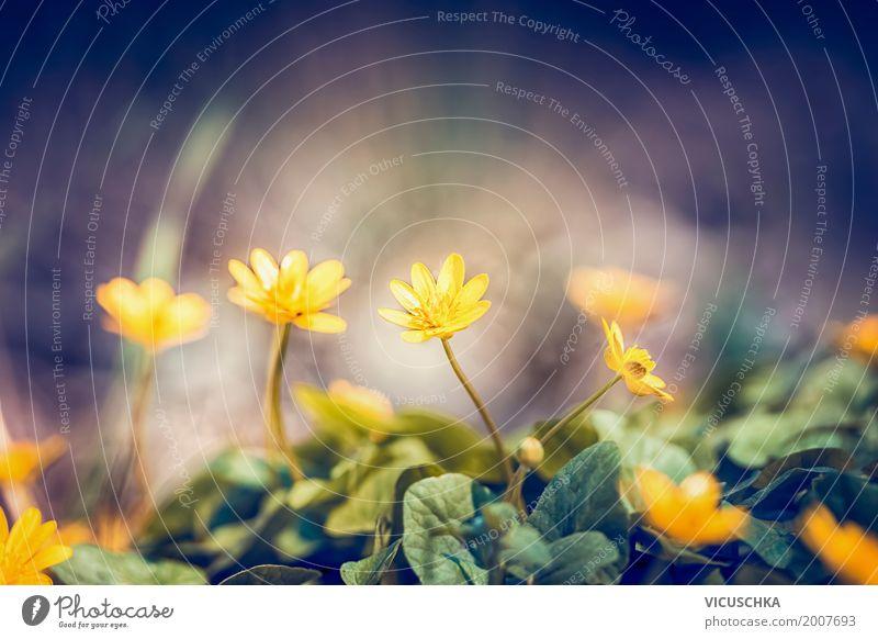Feine gelbe Blumen im Garten Lifestyle Design Sommer Natur Pflanze Frühling Herbst Schönes Wetter Blatt Blüte Park Wiese Hintergrundbild Scharbockskraut