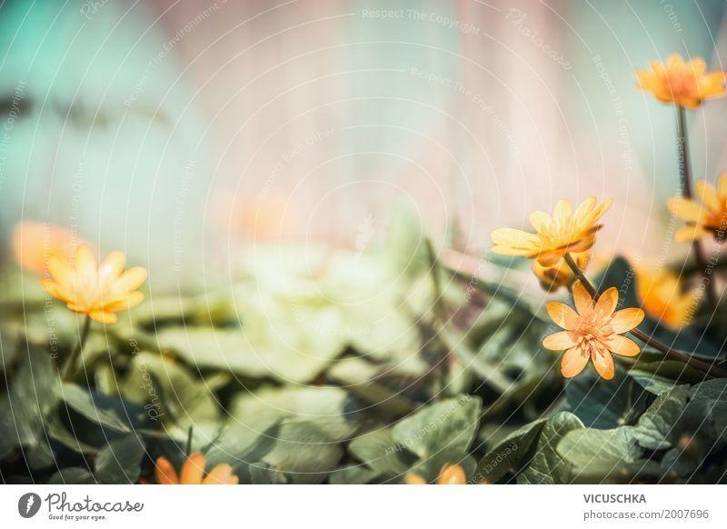 Gelbe Scharbockskraut Blumen im Garten Design Natur Pflanze Frühling Sommer Herbst Blatt Blüte Park Wald Blühend gelb Frühlingsgefühle Hintergrundbild