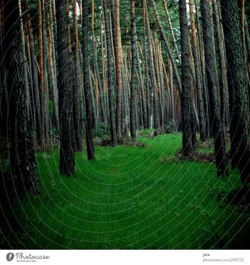 such mich Natur Pflanze Frühling Baum Gras Grünpflanze Wald dunkel Farbfoto Außenaufnahme Menschenleer Tag Nadelwald Baumstamm
