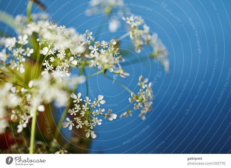 Fake Dekoration & Verzierung Pflanze Frühling Blume Blüte Grünpflanze Wildpflanze Duft positiv Sauberkeit blau weiß einzigartig Farbe mehrfarbig Nahaufnahme Tag
