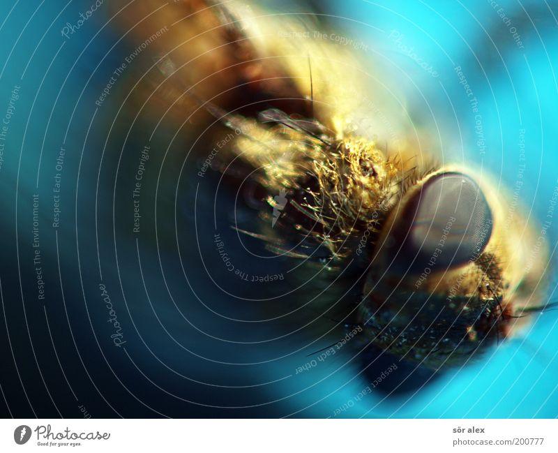 Tote Fliege blau Tier Tod grau liegen Tiergesicht Insekt gruselig unheimlich Monster Außerirdischer außerirdisch Facettenauge