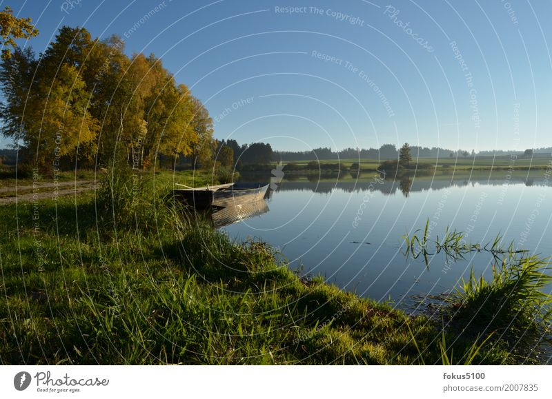 Boot am See Natur Landschaft Wasser Wolkenloser Himmel Herbst Schönes Wetter Baum Gras Seeufer Teich Ruderboot Erholung schön blau grün Farbfoto Außenaufnahme
