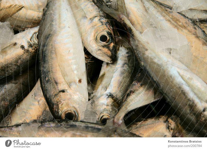 SEAFOOD #02 Lebensmittel Fisch Ernährung Bioprodukte Angeln Totes Tier Schuppen Tiergruppe frisch lecker Appetit & Hunger Qualität Mittelmeer Meerestier Auge