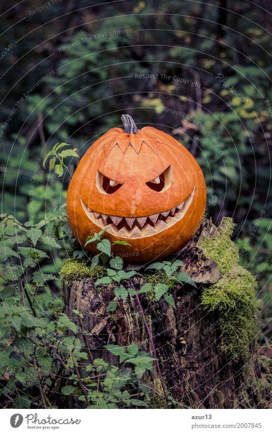 Halloween pumpkin with fiendish smile on scary trunk in forest Lifestyle Umwelt Natur Pflanze Urelemente Erde Herbst Baum Wald Moor Sumpf beobachten hocken
