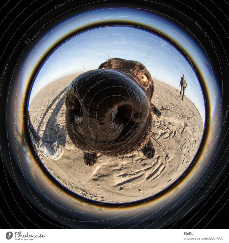 Schnüffel schnüff Natur Hund blau Sonne Tier Strand schwarz braun Sand groß Schönes Wetter nass Nase rund Neugier Wolkenloser Himmel
