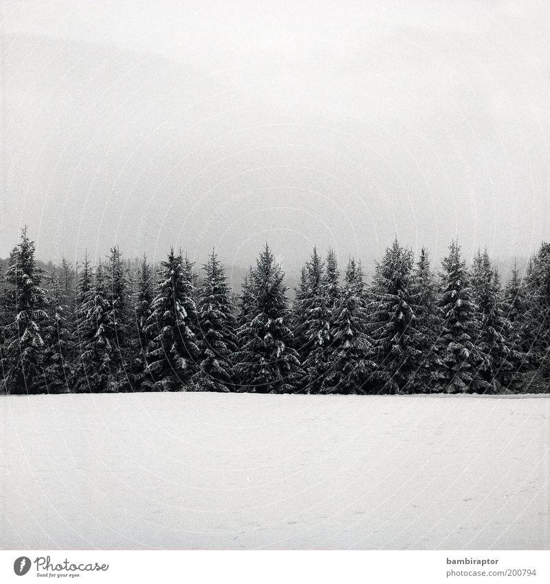 Winter Natur Himmel Baum Pflanze Wald kalt Schnee Landschaft Eis Wetter Umwelt Perspektive Wachstum Frost analog