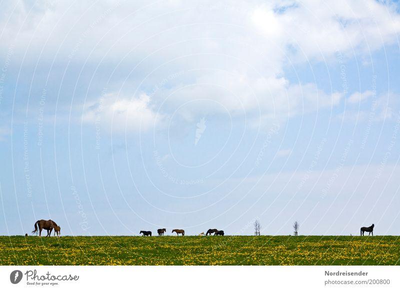 horsepower Himmel Natur schön Ferien & Urlaub & Reisen Wolken ruhig Ferne Wiese Freiheit Landschaft Frühling Tierjunges Freizeit & Hobby ästhetisch Pferd Tiergruppe